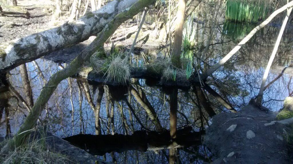 At Black Pond - Miranda Fuller