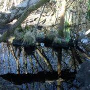 At Black Pond – Miranda Fuller