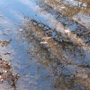 Fragmented spring – Paula Moore